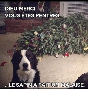 chien_sapin