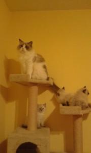 chatons_3