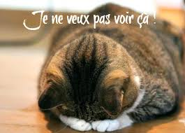 humour_chat