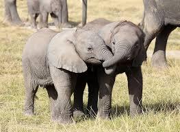 bebe_elephant
