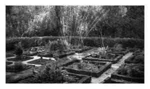 jardin_aromatique_nb