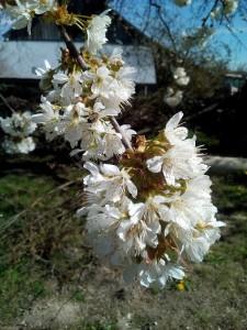 jardin_4