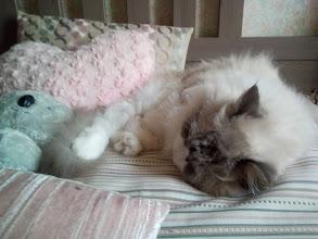 charly_sieste